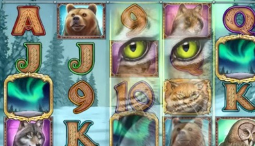 Wild-North-slot-1.jpg